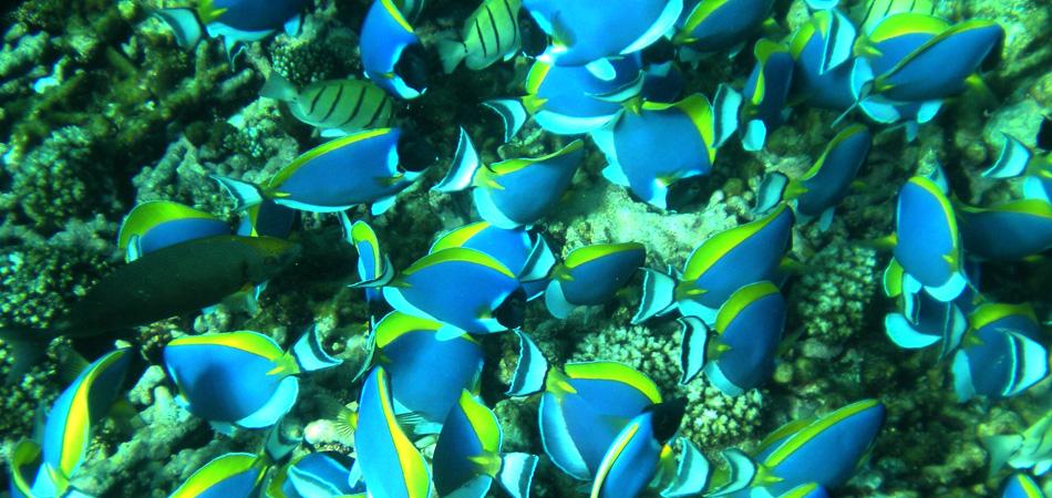 Staytravelling PS Coco Island Seychellen SChnorcheln