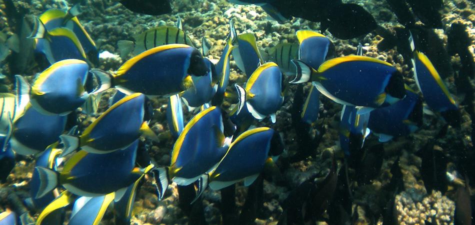 Staytravelling PS Coco Island Seychellen