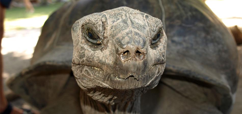Staytravelling PS Riesenschildkröte Seychellen