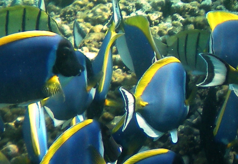 Staytravelling Seychellen Tauchen mit S.V. Sea Bird & S.V. Sea Shell