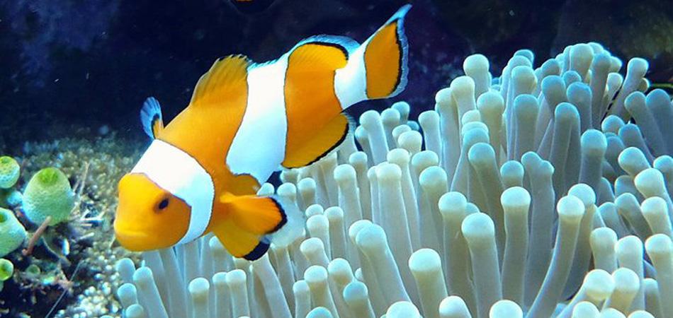 Staytravelling Tulamben Coral Garden