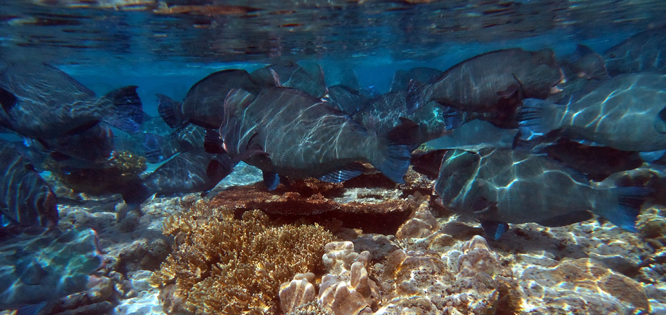 Staytravelling Borneo Sipadan Snorkeling