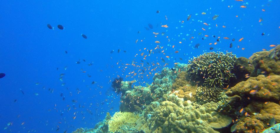 Staytravelling Borneo Sipadan Diving