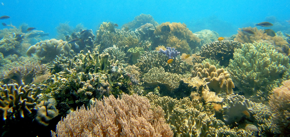 Staytravelling Borneo Diving Corals