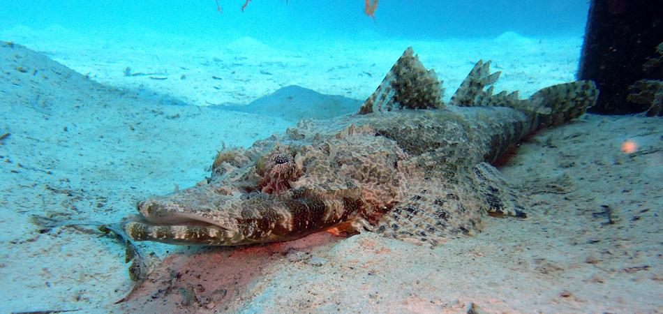 Staytravelling Mabul Crocodile Fish