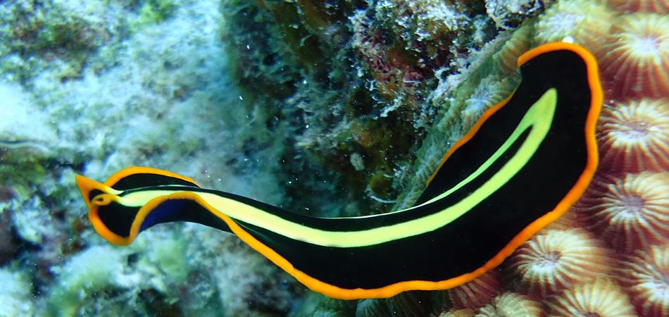 Staytravelling Mabul Macro Diving
