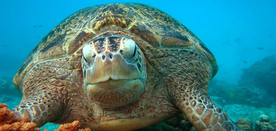 Staytravelling Mabul Schildkröte