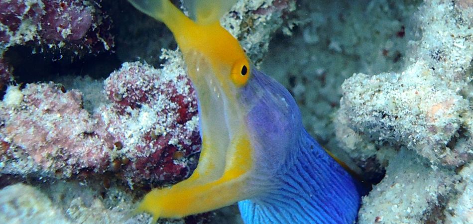 Staytravelling Siamil Macro Diving
