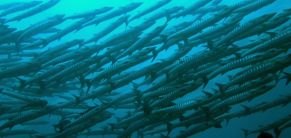 Staytravelling Sipadan Barracuda Point