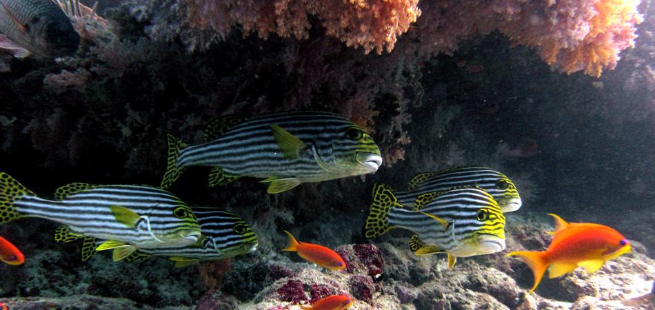Staytravelling Baa Atoll Malediven Tauchen