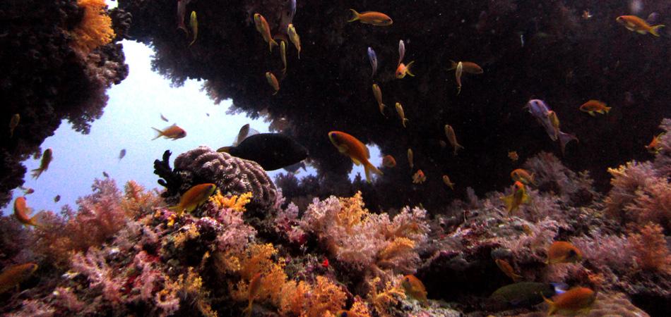 Staytravelling Baa Atoll Malediven Tauchpaket