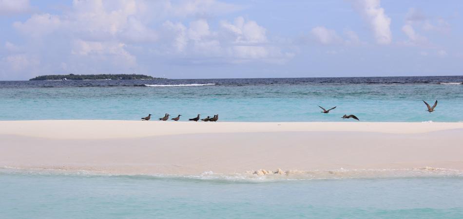 Staytravelling Baa Atoll Sandbank