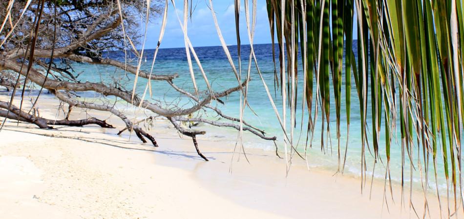 Staytravelling Baa Atoll Tauchkurspaket