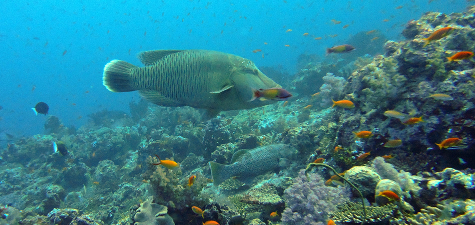 Staytravelling Divesafari Maldives