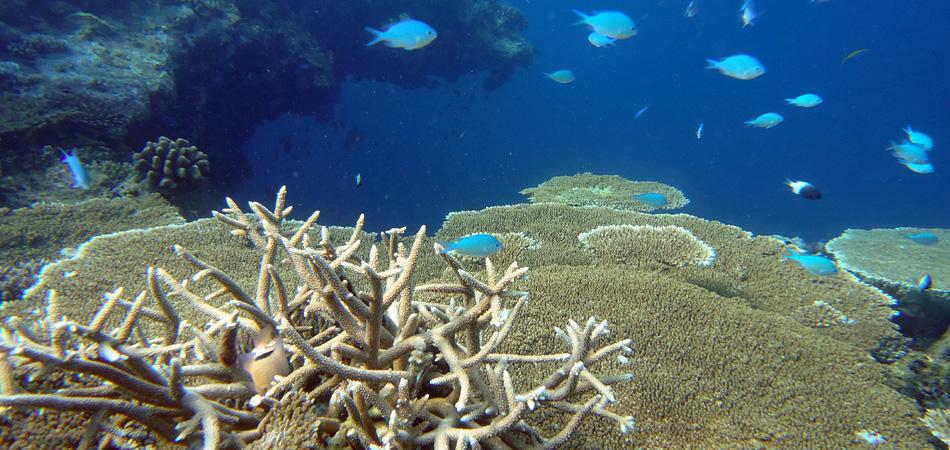 Staytravelling Maldives Ari Atoll