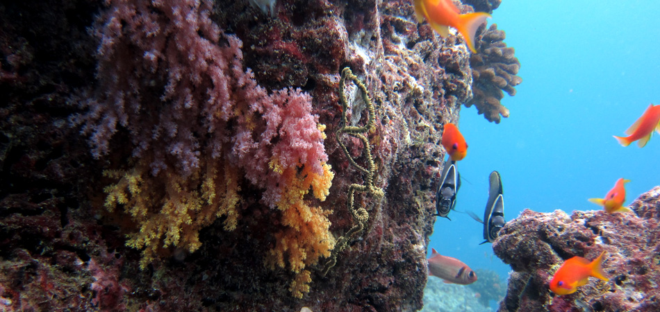 Staytravelling Maldives Baa Atoll Diving