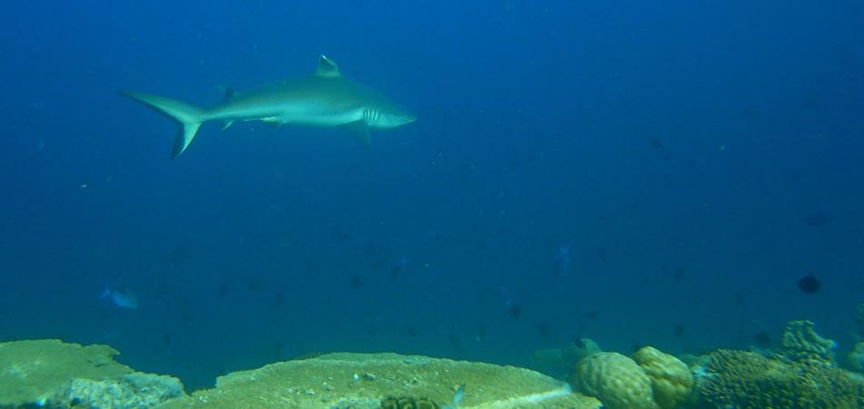 Staytravelling Maldives Diving