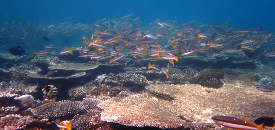 Staytravelling Malediven Baa Atoll Tauchen