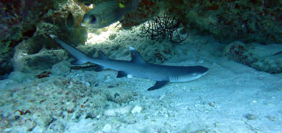 Staytravelling Malediven Tauchen Ari Atoll