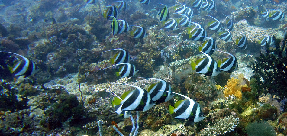 Staytravelling Malediven Tauchen Ari