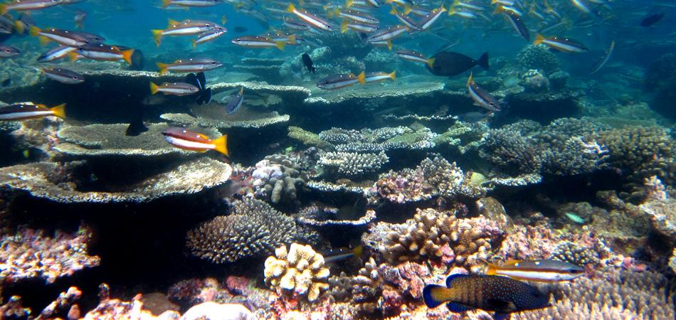 Staytravelling Malediven Tauchen Baa Atoll