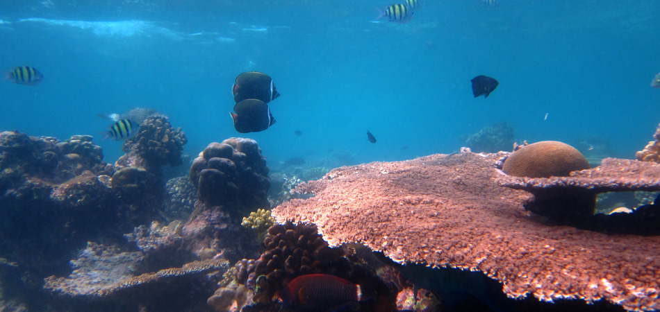 Staytravelling Malediven Tauchen