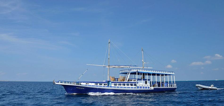 Staytravelling Sea Coral Malediven Safari
