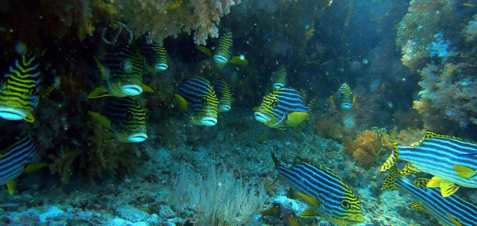 Staytravelling Tauchen Malediven Ari Atoll