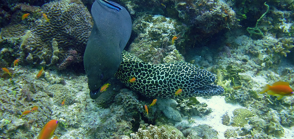 Staytravelling Tauchensafari Malediven