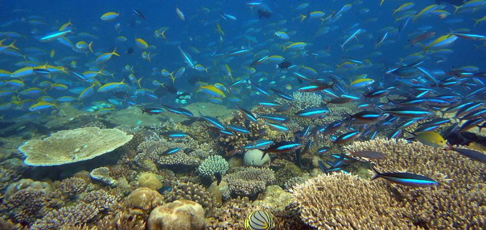 Staytravelling Tauchreise Ari Atoll Malediven
