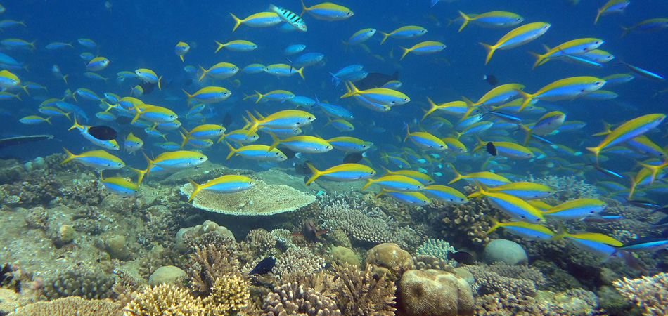 Staytravelling Tauchreise Ari Atoll