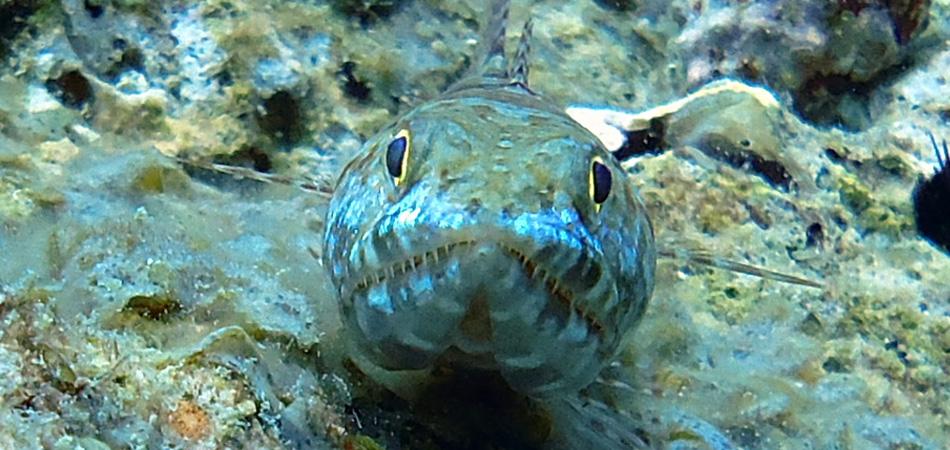 Staytravelling Tauchreise Malediven Safari