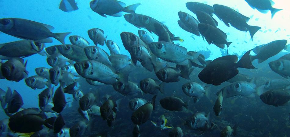 Staytravelling Tauchsafari Ari Atoll