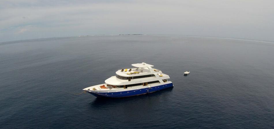 Malediven Tauchsafari, Liveaboard, Ari Atoll, Rasdhoo, Felidhoo, Südmale, Nordmale, Meemu, Thaa, Laamu, Huvadhoo, Addu Tauchreise, Manta Cruise