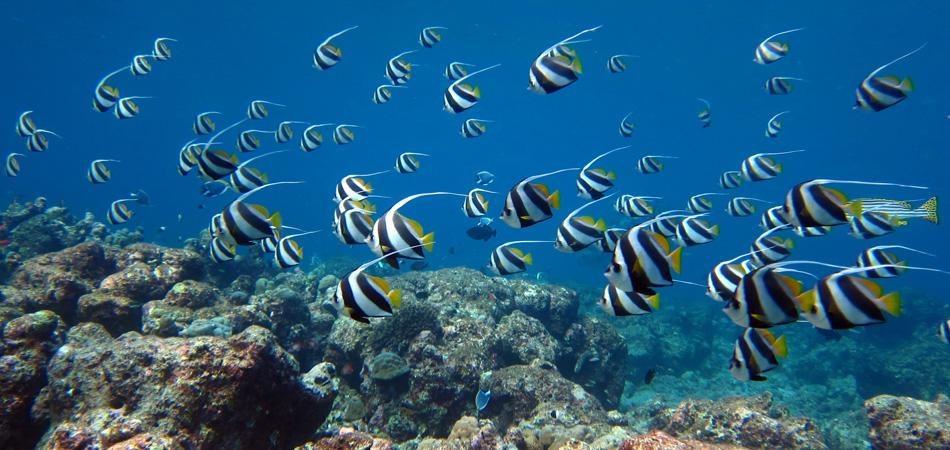 Staytravelling Manta Cruise Tauchsafari Malediven