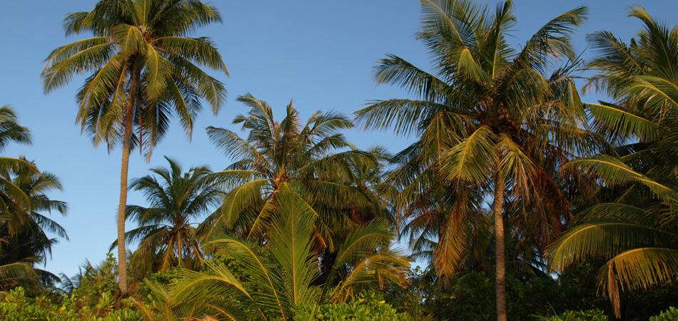 Staytravelling Malediven Dhigurah Island