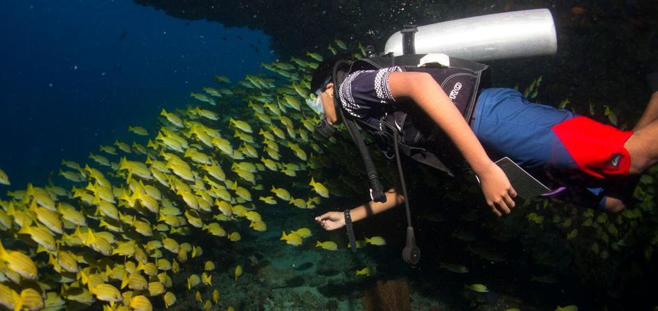 Staytravelling Malediven Dhigurah Tauchen