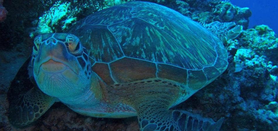 Staytravelling Malediven Südari Tauchurlaub