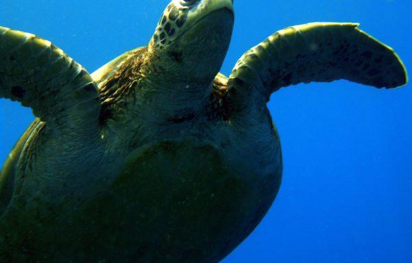 Delfine, Schildkröten, Mantas – 5 Tage