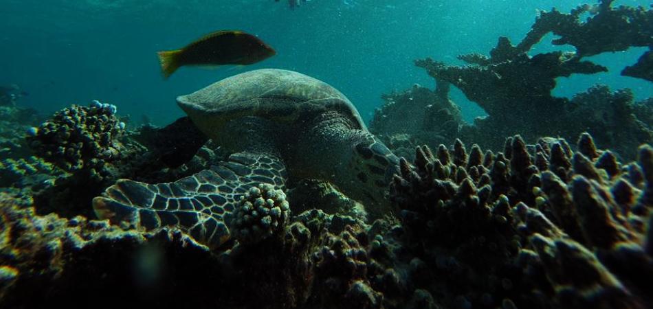 Staytravelling Malediven Schildkröten