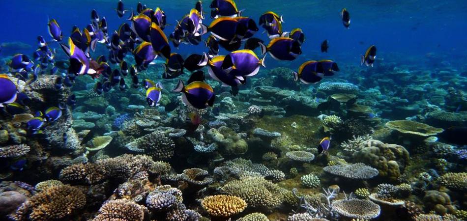 Staytravelling Malediven Yoga Und Schnorcheln