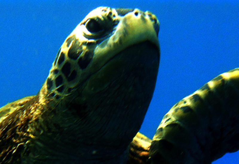 Malediven Wildlife Erlebnisreise