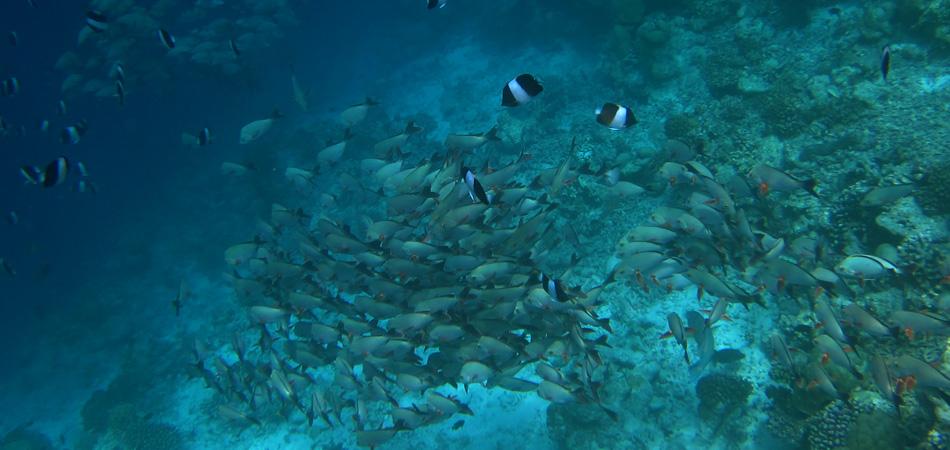 Staytravelling Malediven Rasdhoo Snorkeling