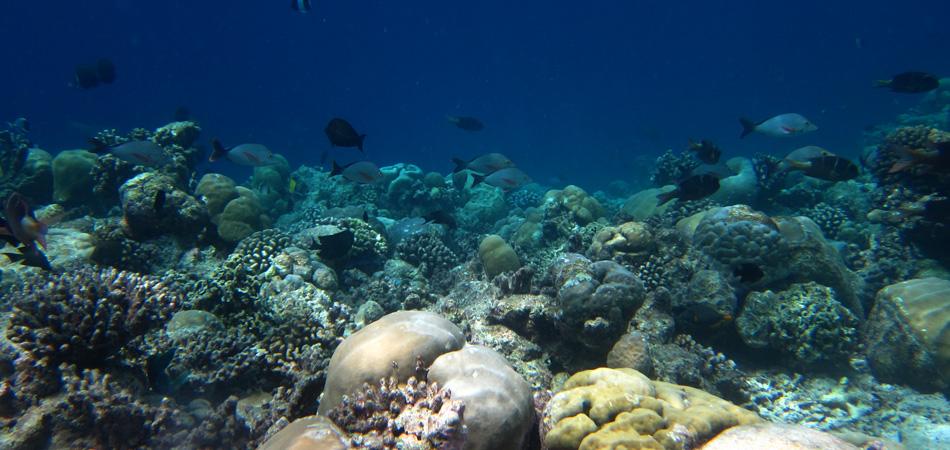 Staytravelling Malediven Schnorchelreise Rasdhoo