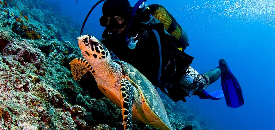 Staytravelling Malediven Tauchreise Baa Atoll