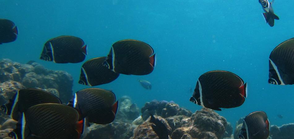 Staytravelling Malediven Abenteuerreise