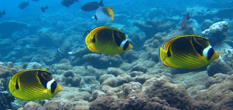 Staytravelling Malediven Erlebnisereise