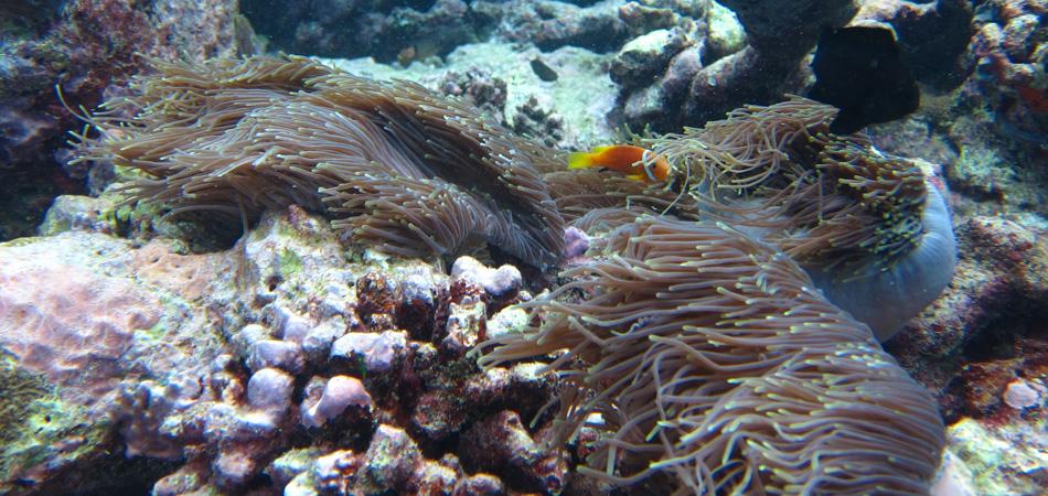 Staytravelling Malediven Unterwasser