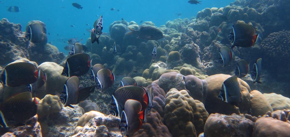 Staytravelling Maledivenreise Schnorcheln
