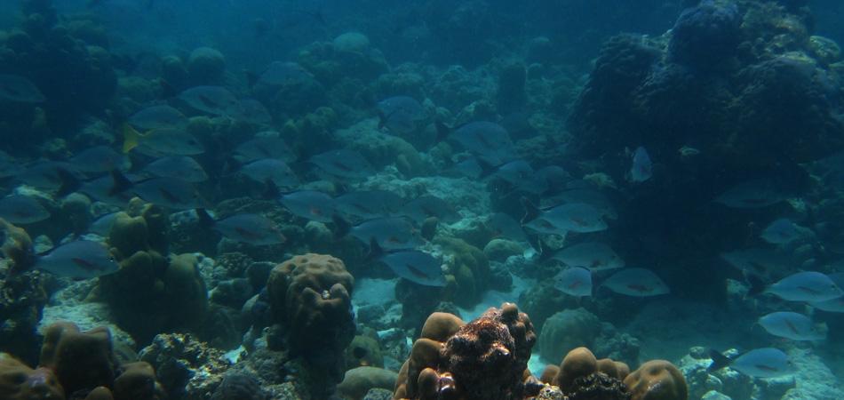 Staytravelling Maledivenreise